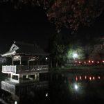 上沼公園の夜桜