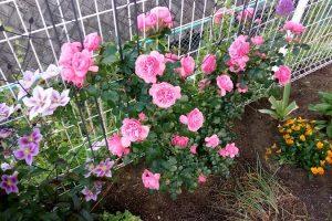 EastCafeの庭の花