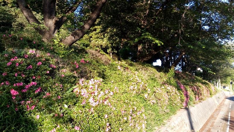 熊野神社近くの花