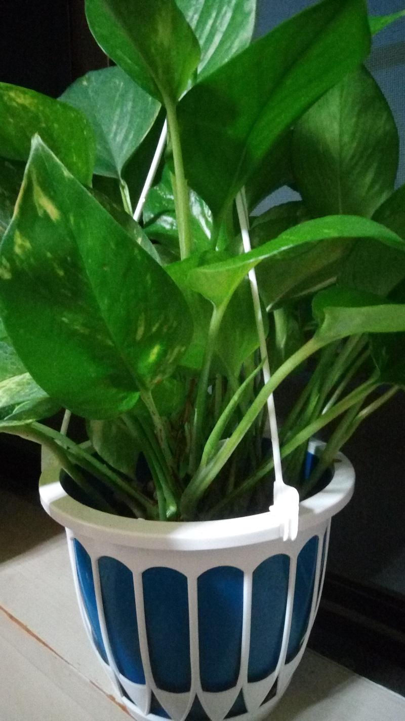 マミーマートで購入した植物