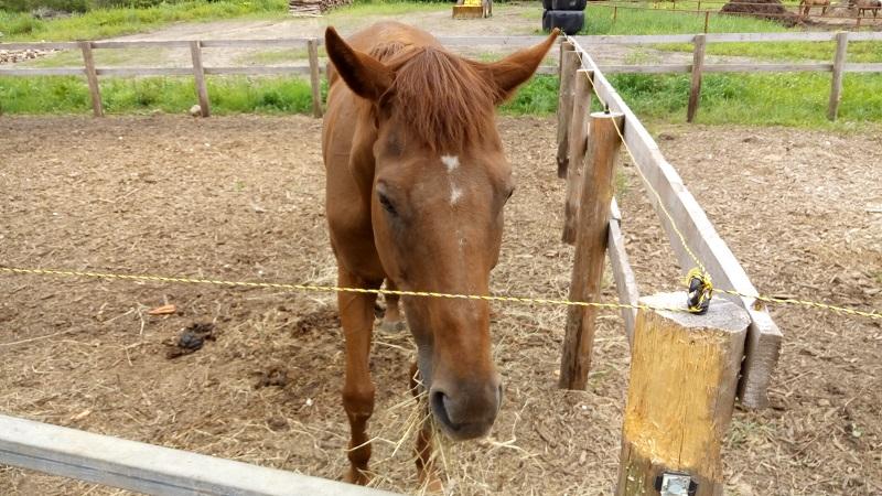 函館どさんこファームの馬9