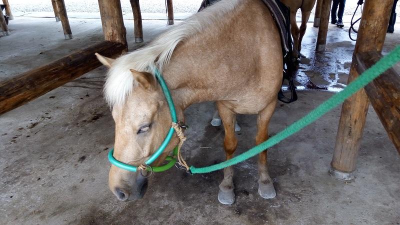 函館どさんこファームの馬11