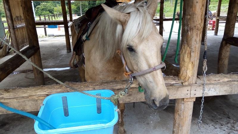 函館どさんこファームの馬1