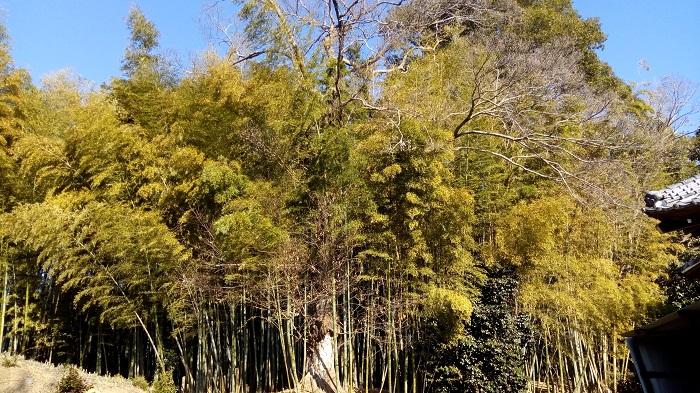 光福寺(東松山)にあった大きな樹木