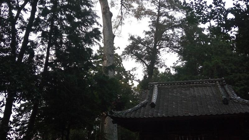 帰り際にもう一度、椋の木を見てみた