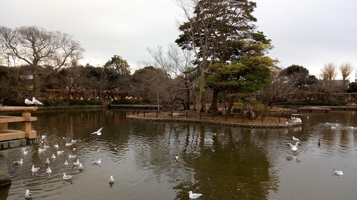 牡丹園の横の池