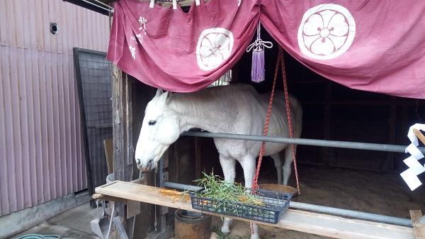 先頭を歩いていた馬