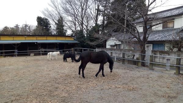他にも来ていた馬
