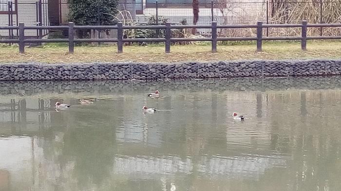 大沼公園にいた鳥さん