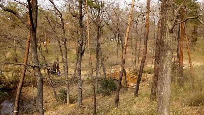 森林公園、冒険コースの様子1