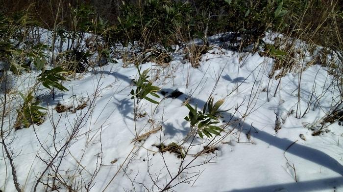 まだ雪が残っていました。