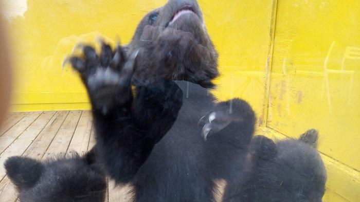小さな熊さんが迎えてくれます1