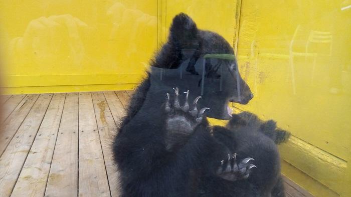 小さな熊さんが迎えてくれます2