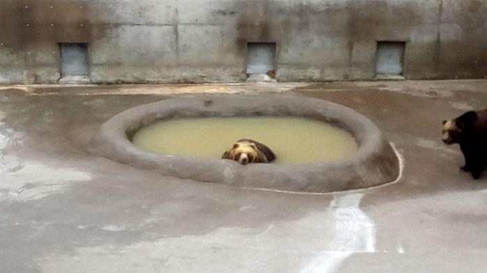 クッキーいらない。そっとしておいて欲しい熊さん