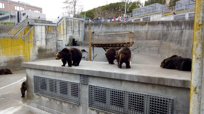 人のおりの上にも熊さん