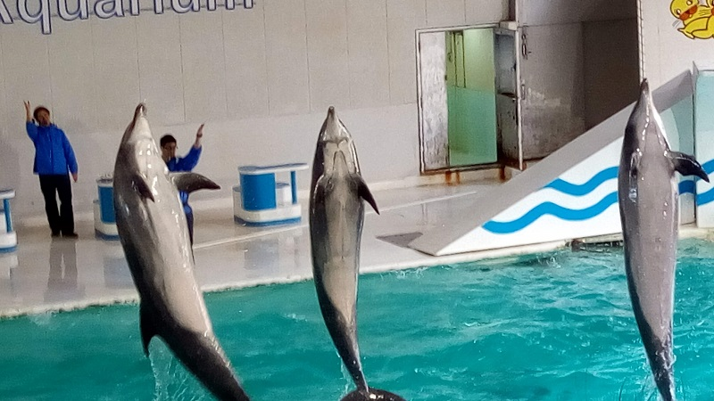 おたる水族館、イルカショー