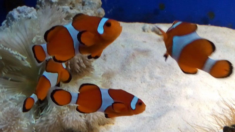 おたる水族館、ニモ