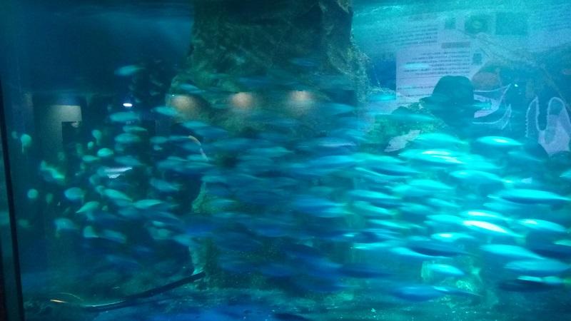 おたる水族館、魚が一杯