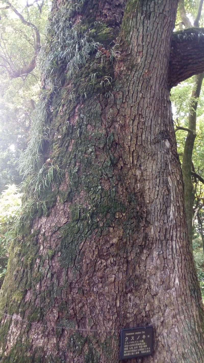 星溪園、大きな樹木